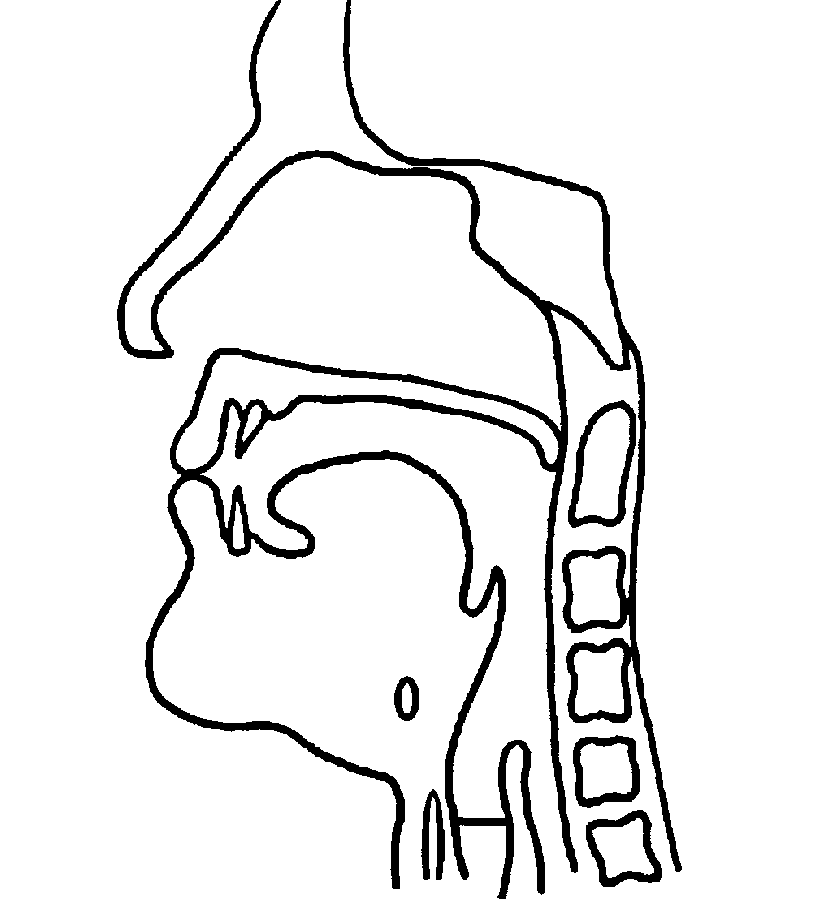 bilabial plosives