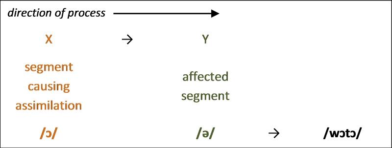 Figure 6. Progressive assimilation in vowel harmony
