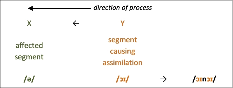 Figure 7. Regressive assimilation in vowel harmony