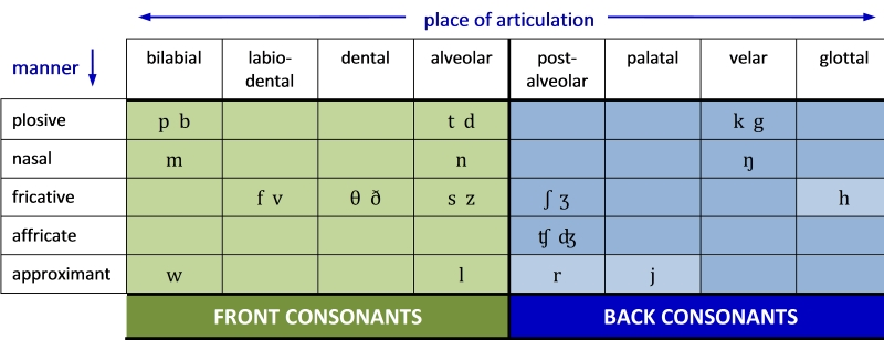 Table 5. Distribution of front and back consonants