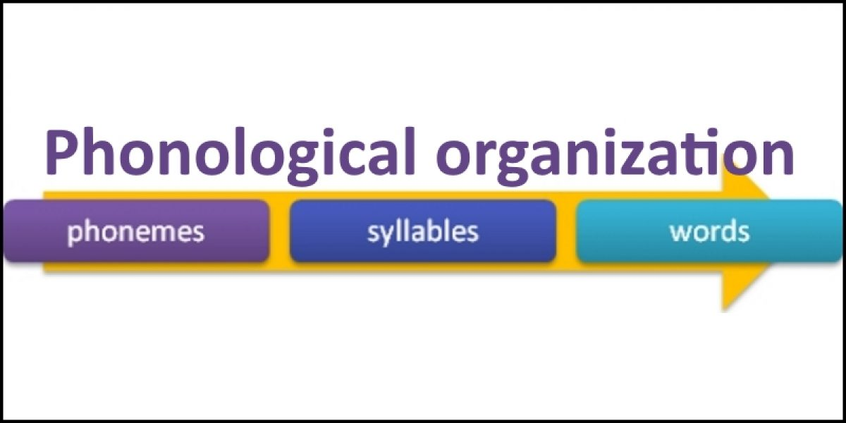 Phonological Organization