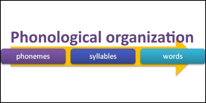 phonological organization header