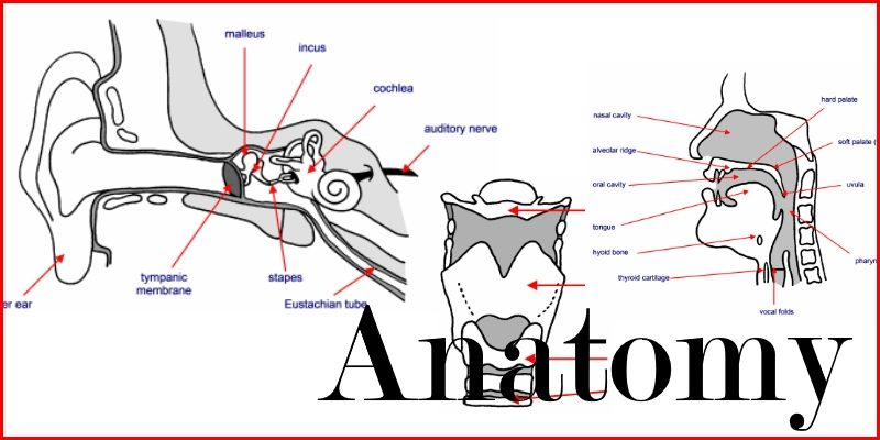 anatomy header