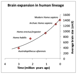 Brain expansion in human lineage