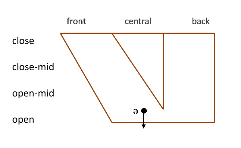 Figure 2. Lowered central schwa vowel
