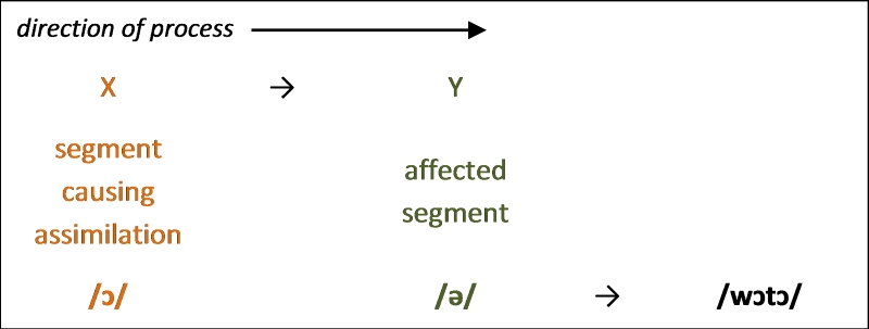 Figure 6. Progressive assimilation in vowel harmony