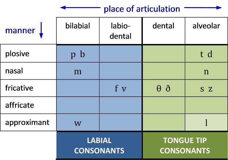 Table 12. Distribution of labial and tongue tip consonants