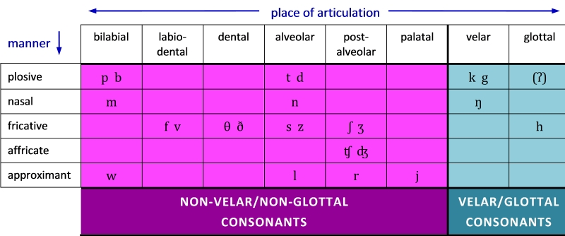 Table 6. Distribution of non-velar,non-glottal and velar,glottal consonants