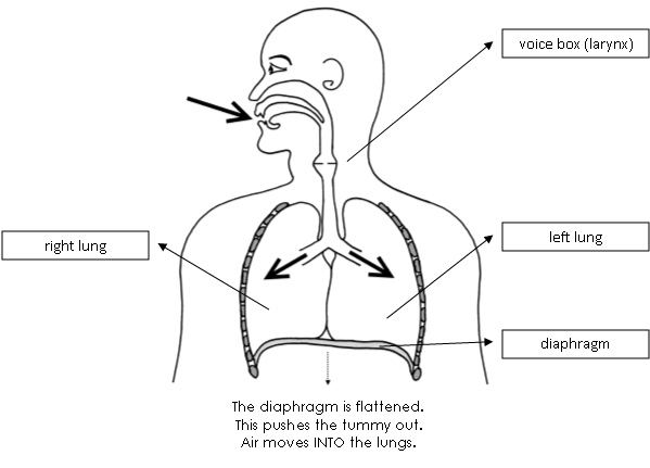 ssv respiratory system breathing in