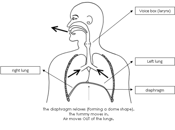 ssv respiratory system breathing out